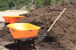 Compost mulch for the planting mounds.