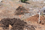 Prepped mounds with flags and compost.