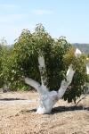 Lush growth on 7-month stumped tree.